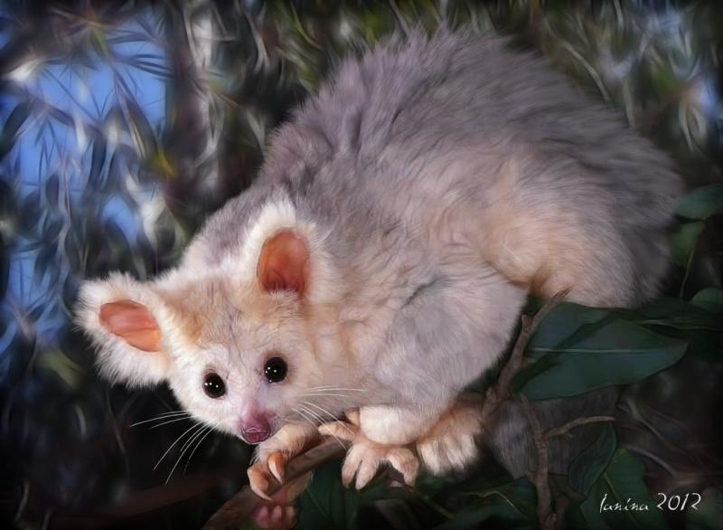 Click for the original size :greater_glider04b.jpg