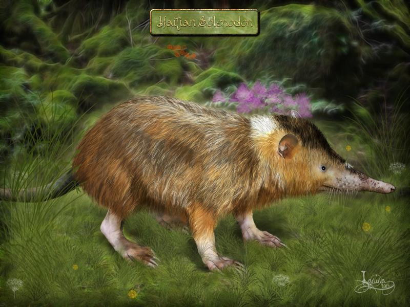 Click for the original size :solenodon01b.jpg