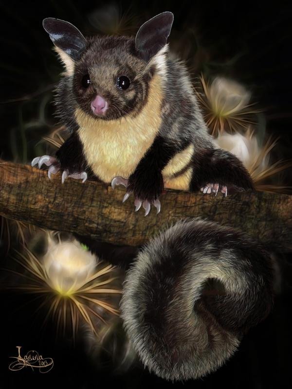 Click for the original size :yellow-bellied-glider01b.jpg