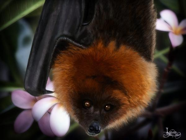 Click for the original size :Rodrigues-flying-fox01b.jpg